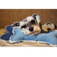 牛仔犬用骨头状抱枕