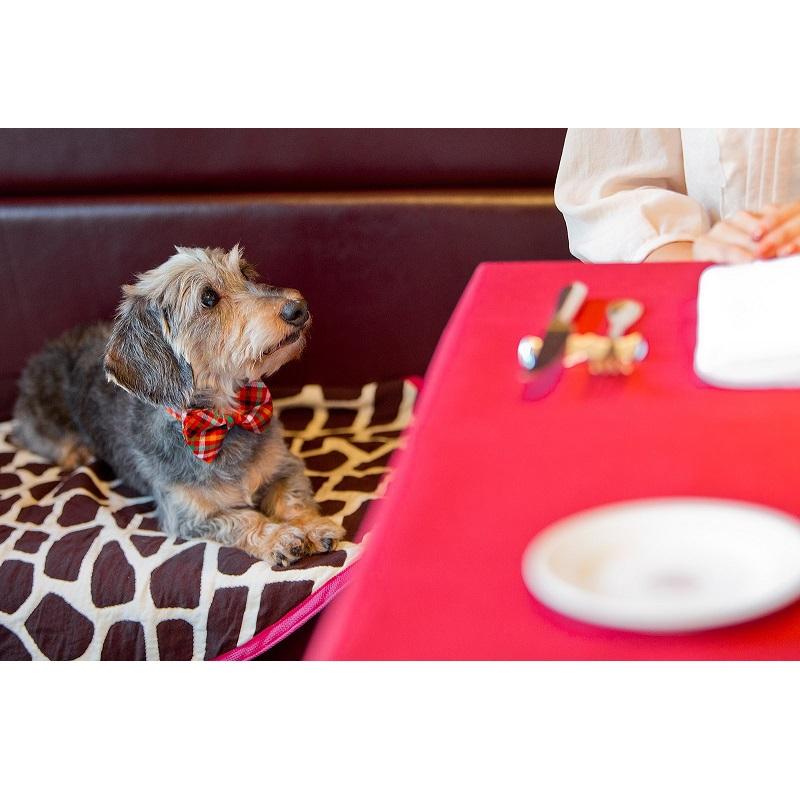 犬用领结(彩色格/红色x深蓝色)